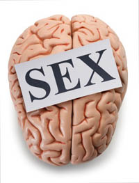 brain strives for sex